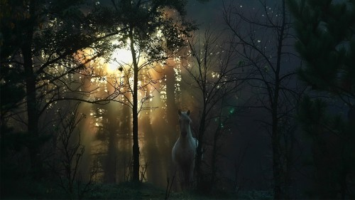 white-horse-in-the-forest-wallpaper